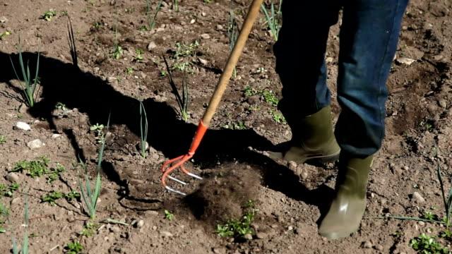 italy, fiemme valley, farmer working on field of onion - カバレーゼ点の映像素材/bロール