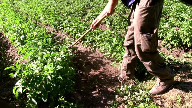 italy, fiemme valley, farmer working on field - カバレーゼ点の映像素材/bロール