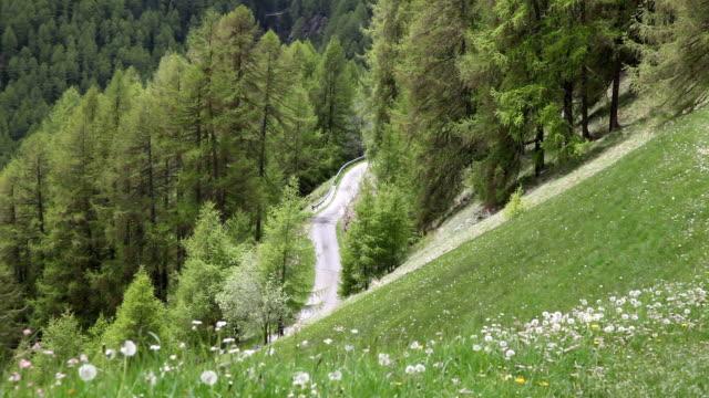 Italy, Schnalstal, Senales valley, road between the meadows
