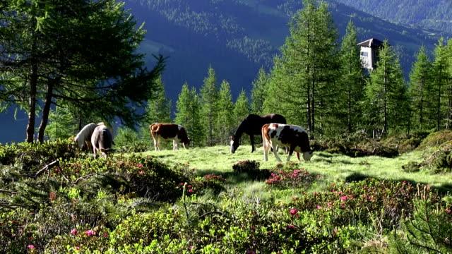 Italy, Sued Tirol, Alto Adige, Sarentino, Sarntal