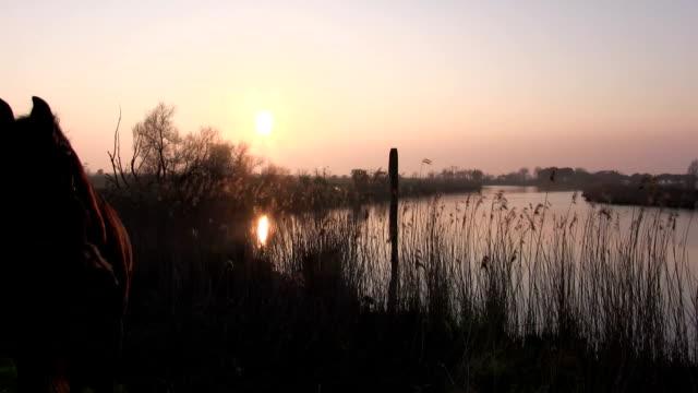 Italy, Venice lagoon, the shepherd