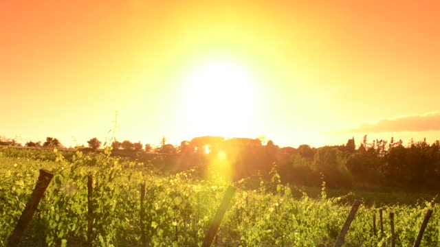 Italy vineyard at sunset - Tuscany land