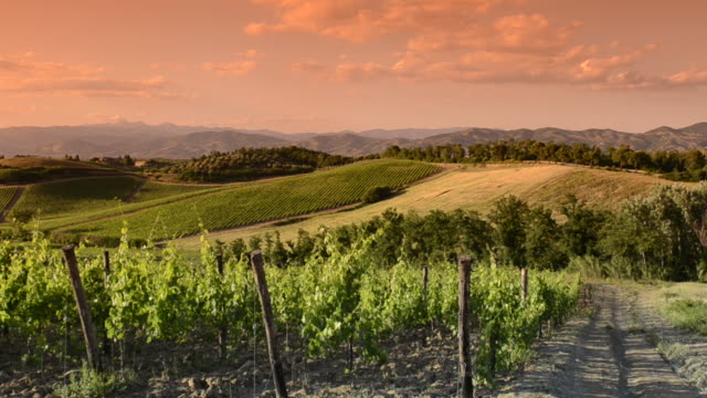 Italy vineyard at sunset