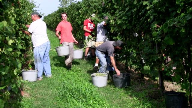 Italy, wine production