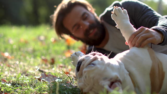 it's always the right time for playing - pet owner stock videos & royalty-free footage