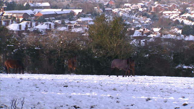 it's been the coldest christmas in living memory with temperatures for december 25th the lowest since 1890. some snow has fallen in scotland & the... - robin day stock-videos und b-roll-filmmaterial