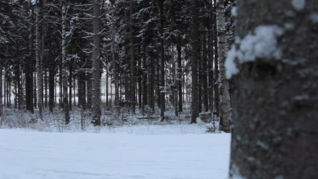 it's cold outside - cross-country ski - nordic skiing event stock videos and b-roll footage