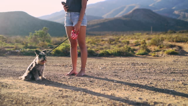 it's not an adventure until it's documented on social media - dog walking stock videos & royalty-free footage