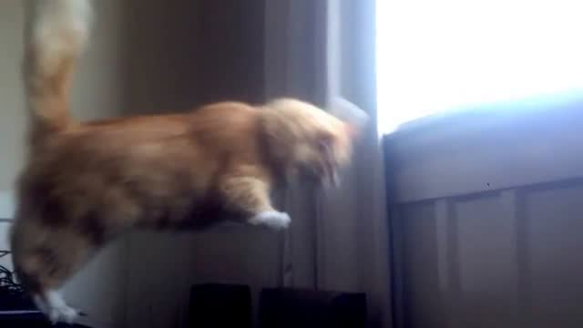 it's one small step for most cats, one giant leap for skimbles. the new zealand cat thought he could do a perfectly normal cat thing – jump from a... - jumping stock videos & royalty-free footage