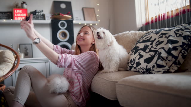 it's selfie time! - pets stock videos & royalty-free footage