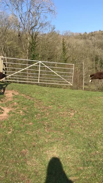 stockvideo's en b-roll-footage met it's springtime, and we are so happy about it. springtime is the best season of the year, and no wonder they call it the queen of all seasons. poets... - genomen met mobiel apparaat