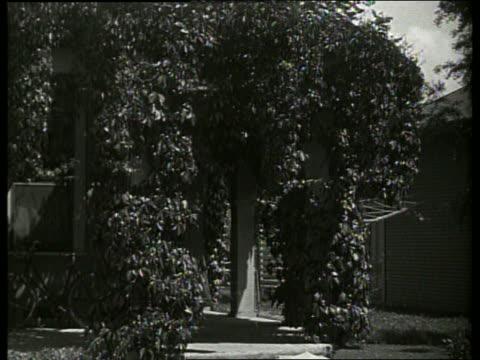 vídeos de stock, filmes e b-roll de b/w ivy covered house / 1920's / no sound - trepadeira