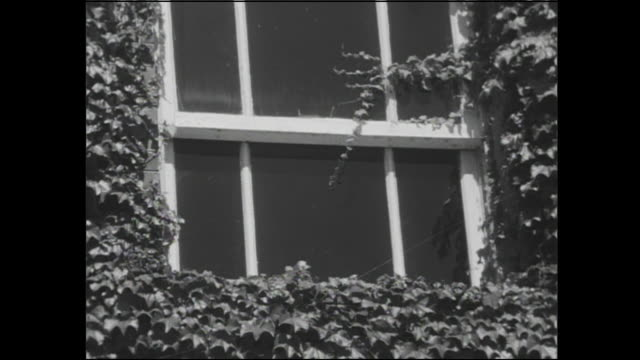 ivy covers the facade of a convent in hakodate, japan. - convent stock videos & royalty-free footage