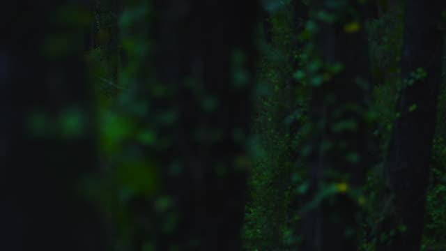 vídeos y material grabado en eventos de stock de ivy in a pine forest, dunas de liencres natural park, pielagos municipality, cantabria, spain, europe - pinar
