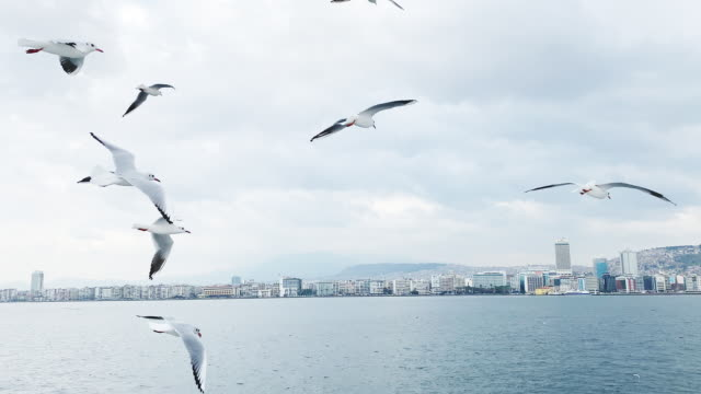 izmir city view from ferry with seagulls - stormo di uccelli video stock e b–roll