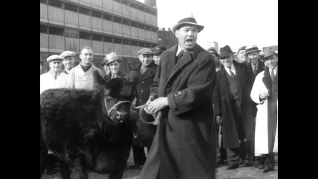 / jack dempsey shaking hands with a man outside surrounded by crowd / jack dempsey stood smiling for press / holds prize cow by rope / dempsey steers... - 1935 stock videos & royalty-free footage