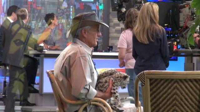 jack hanna at the 'good morning america' studios jack hanna at the 'good morning america' studios on june 13, 2012 in new york, new york - jack hanna stock-videos und b-roll-filmmaterial