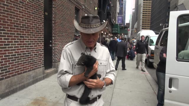 jack hanna with a binturong at the 'late show with david letterman' studio - jack hanna stock-videos und b-roll-filmmaterial