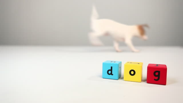 Jack russell and building blocks that spell the word dog