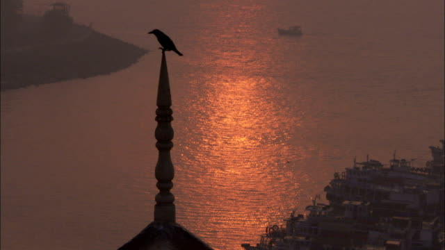 A Jackdaw perches on a hotel roof spire. Available in HD.