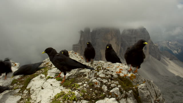 jackdaws near the three peaks - tre cimo di lavaredo stock videos & royalty-free footage