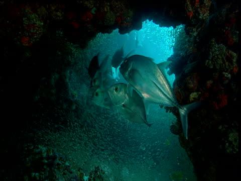 vídeos y material grabado en eventos de stock de jacks swim in cave, phuket - mar de andamán