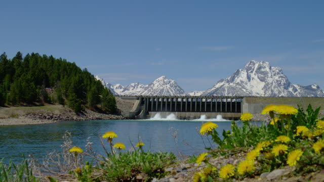 wide shot jackson lake dam with snowy mt moran and teton range in background and yellow flowers in foreground, grand teton national park, wyoming - mt moran stock videos & royalty-free footage