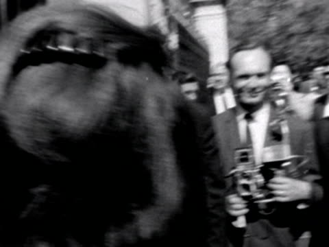 stockvideo's en b-roll-footage met jacqueline kennedy her sister and their children walk through the crowds and enter the grounds of buckingham palace - jacqueline kennedy