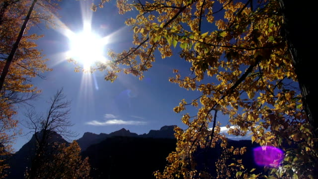jagged mountain peaks with golden leafed trees blowing in the wind in foreground. - glacier national park us stock videos and b-roll footage