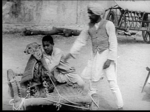 jaipur, india - rajasthan stock videos and b-roll footage