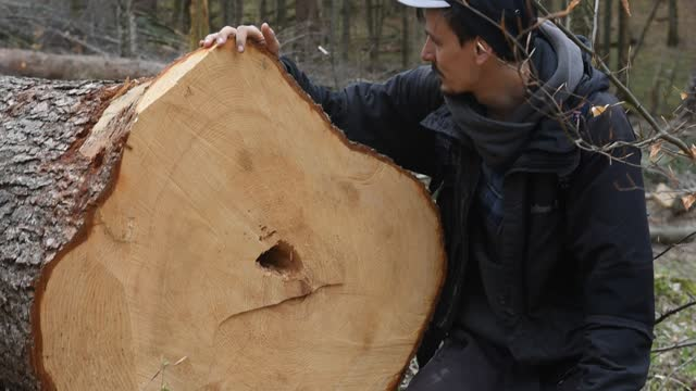 jakub, a 34 years old with doctoral studies on ecological economics, and edyta, a 34 years old environmental activist inspect recently logged trunks... - home economics stock videos & royalty-free footage