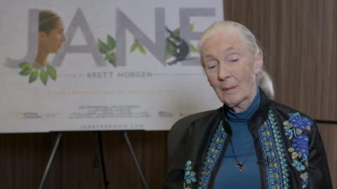 vidéos et rushes de jane goodall on chimpanzee violence at dr jane goodall interview at kensington hotel on november 15, 2017 in london, england. - chimpanzé