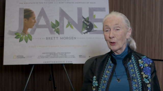 INTERVIEW Jane Goodall on her Chimpanzee Flo their development of Flo her relationship with her mother at Dr Jane Goodall Interview at Kensington...