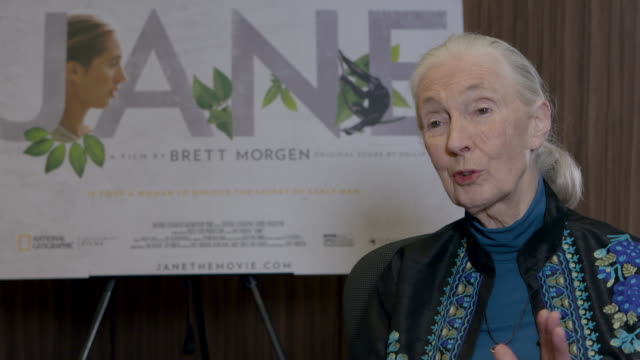 INTERVIEW Jane Goodall on her first time seeing a group of Chimpanzee's at Dr Jane Goodall Interview at Kensington Hotel on November 15 2017 in...