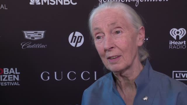 interview jane goodall talks about needing people to come together to do the right thing at 2017 global citizen festival for freedom for justice for... - desire stock videos & royalty-free footage