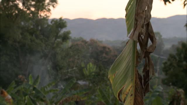 january 4 2011 montage scenic vista of mountainside seen through tall grasses / mirebalais haiti - hispaniola stock videos & royalty-free footage