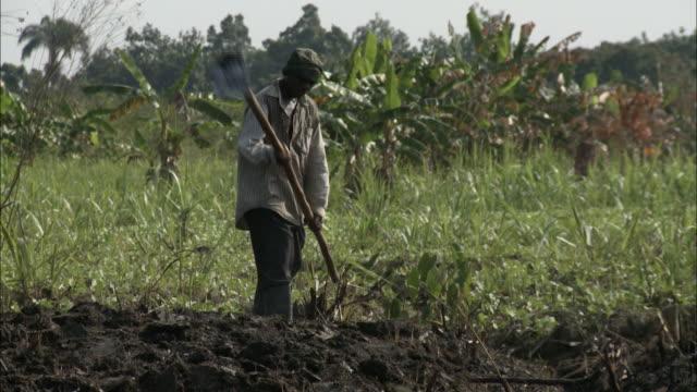 january 8 2011 ws farmhand hoeing freshly turned soil on sugar cane farm / leogane haiti - sugar cane stock videos & royalty-free footage