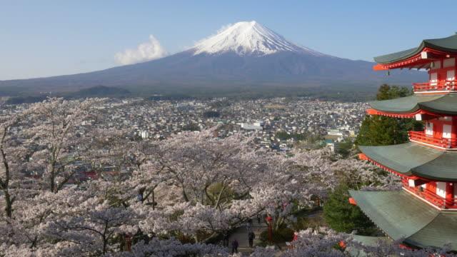 vidéos et rushes de japan beautiful landscape mountain fuji and chureito red pagoda with cherry blossom - préfecture de yamanashi