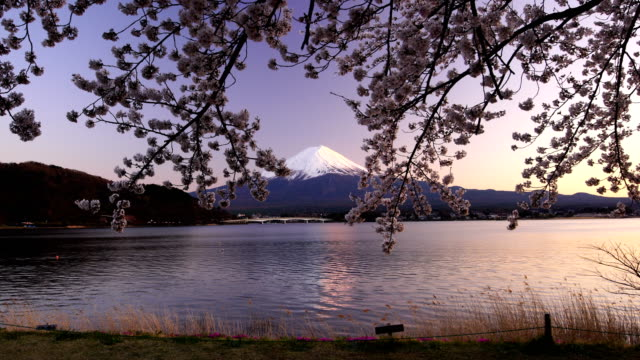 Japan beautiful landscape Mountain Fuji with cherry blossom sakura