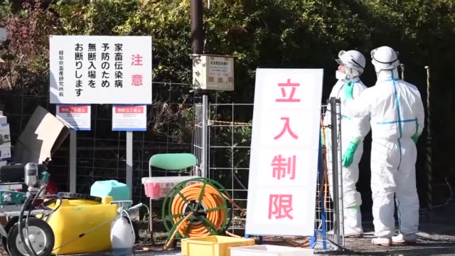 a local government in central japan said wednesday a hog cholera infection has been found at a public research institute the third such case since... - epidemi bildbanksvideor och videomaterial från bakom kulisserna