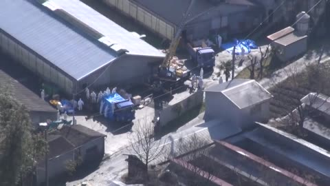 stockvideo's en b-roll-footage met workers in hazmat suits gather in front of a pig farm in toyota, aichi prefecture, central japan, on feb. 6 after a hog cholera outbreak was... - epidemie