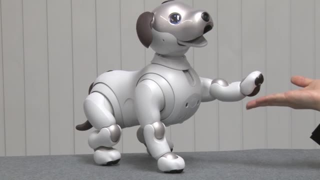 sony corp on thursday released its new artificialintelligence equipped aibo robot dog in japan delivering it to buyers who placed preorders last year... - sony stock videos & royalty-free footage