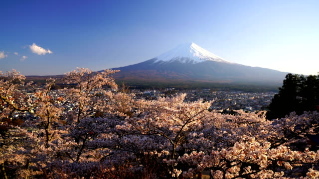 Japan landscape with Mountain Fuji and cherry blossom sakura