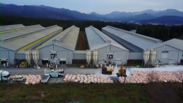stockvideo's en b-roll-footage met drone shot workers bury bags containing culled chickens at a poultry farm in sekikawa in the sea of japan coastal prefecture of niigata on nov 30... - vogelpestvirus