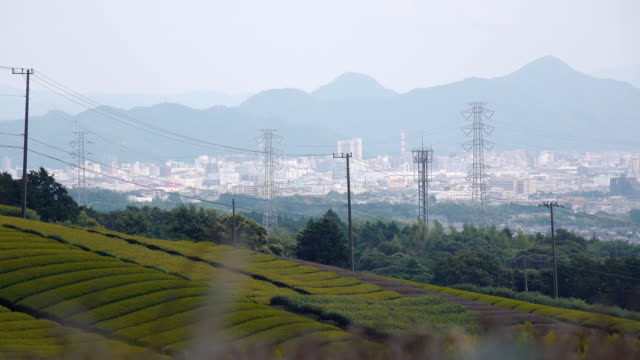 Japan Tea Organic Farm with City Background