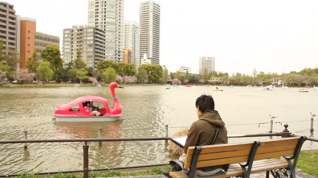 japan, tokyo, ueno - shinobazu pond stock videos and b-roll footage