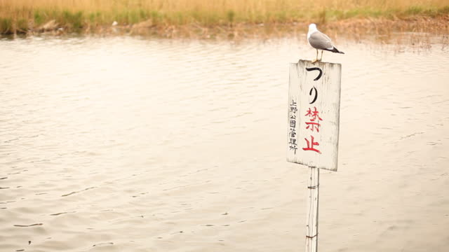 japan, tokyo - shinobazu pond stock videos and b-roll footage