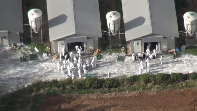 video taken nov. 25 from a kyodo news helicopter shows officials in protective suits working to cull more than 90,000 chickens at a chicken farm in... - virus dell'influenza aviaria video stock e b–roll