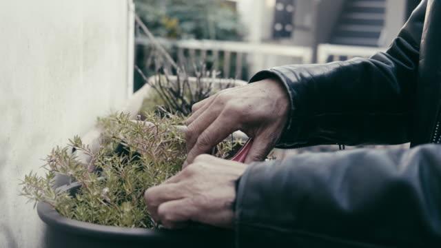 日本の成人アクティブシニアが植物の世話をする - 植物学点の映像素材/bロール