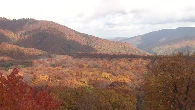 japanese beech forest in autumn color, fukushima, japan - kanto region stock videos & royalty-free footage